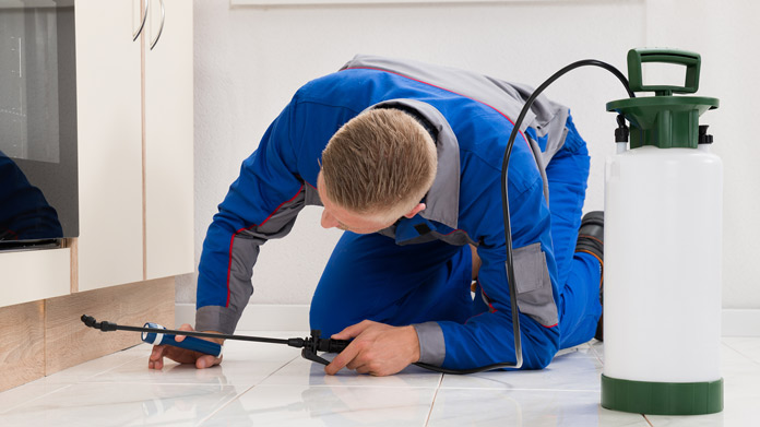 Why should you Hire a Professional Pest Control Service