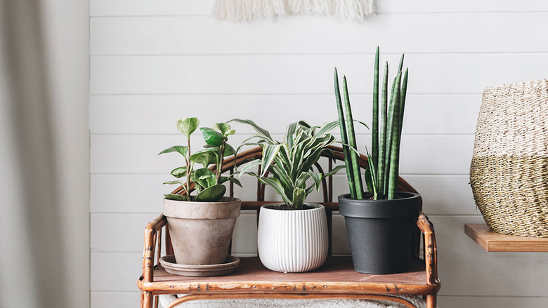 Where to Find the Best Potted Plant in Singapore?